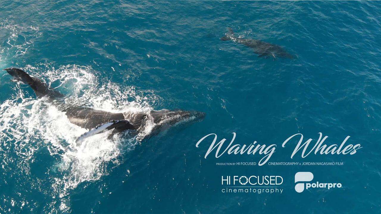 Waving Whales, Maui Hawaii